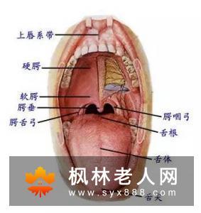 口腔溃疡怎样护理